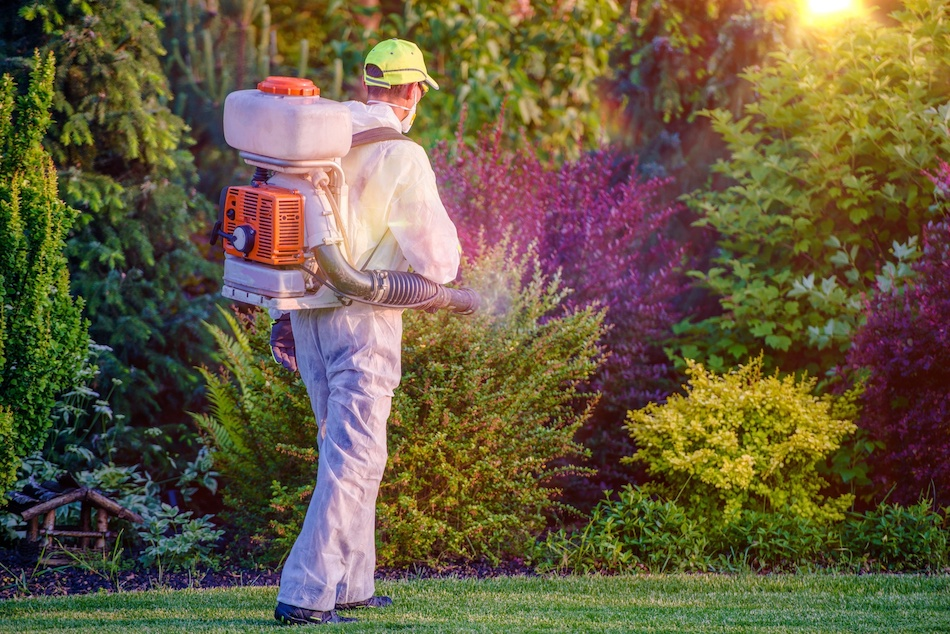 Addressing Pest Problems When Selling Your Home