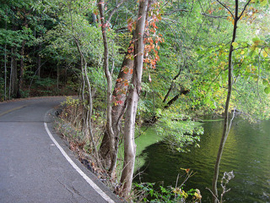 Radnor Lake - Image Credit: http://www.flickr.com/photos/51018933@N08/6266627653/
