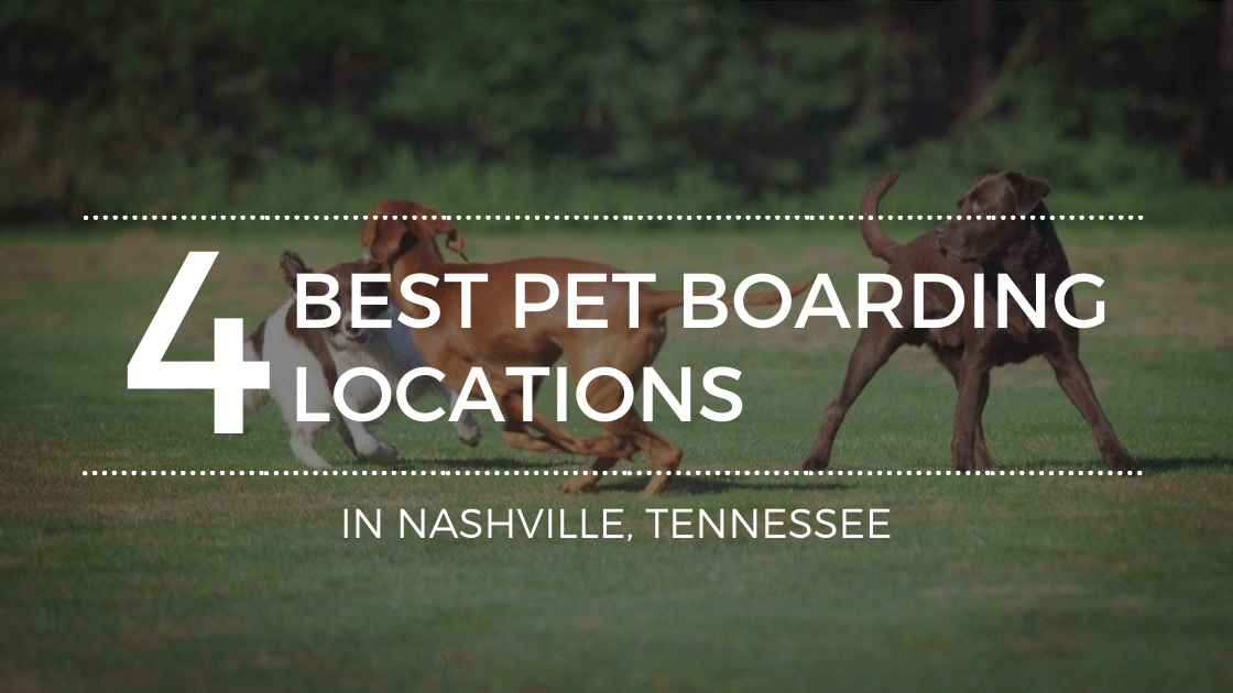 Boarding Your Pet In Nashville? All About the Best Boarding Companies
