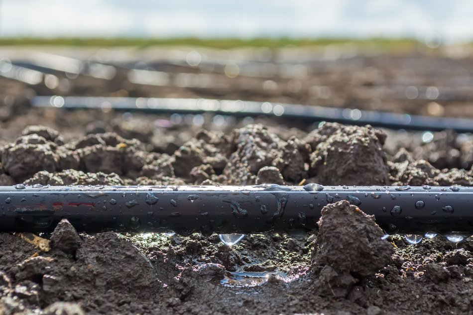 Drip Irrigation Efficiency