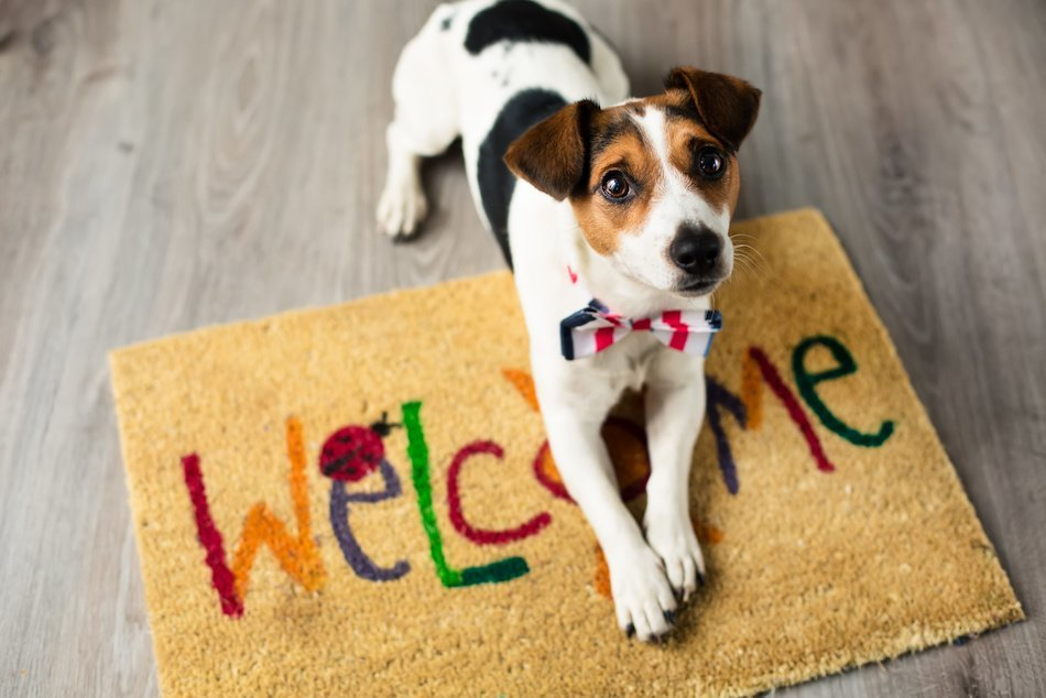 5 Ways to Create a Low-Stress Home Selling Process, Even With Pets